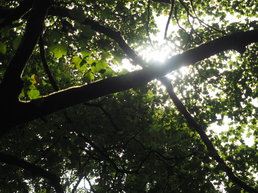 Light shining through branches of tree.
