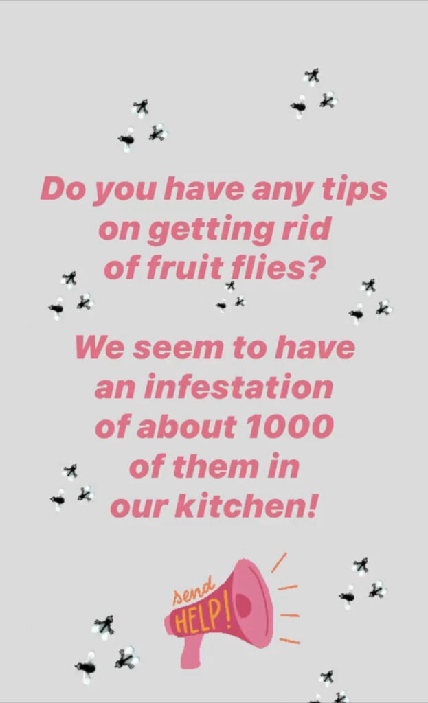 Instagram Story with text asking how to get rid of an invasion of fruit flies.
